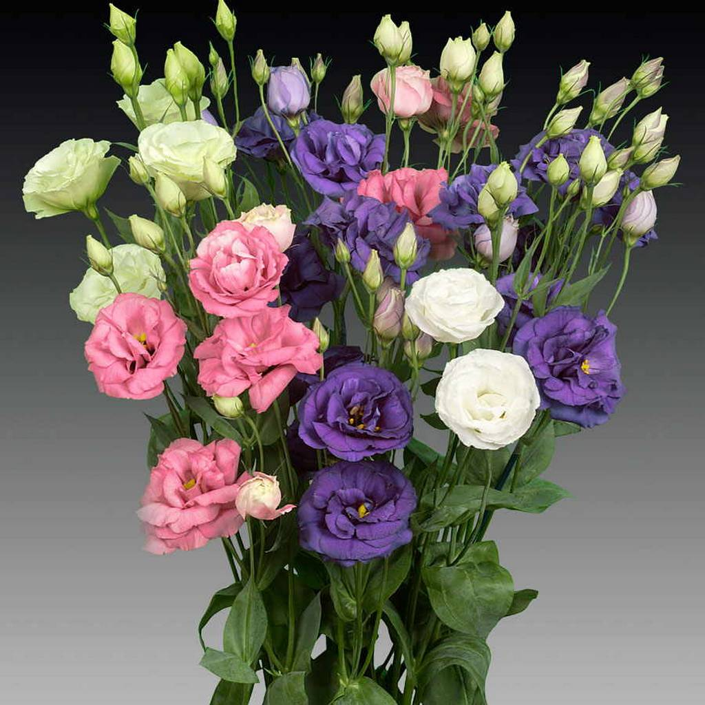 Цветов в минск купить букеты искусственных