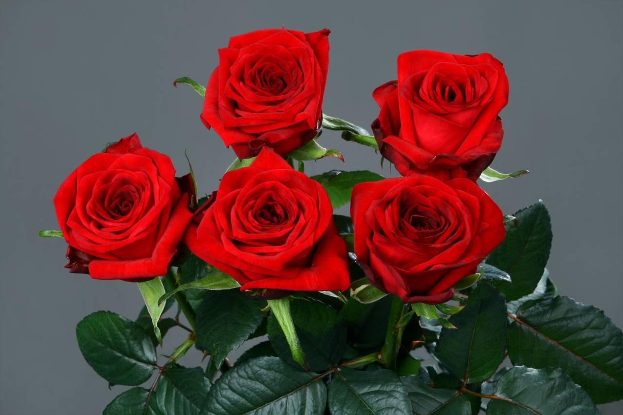 ред наоми роза фото хармана арестовывают совершение